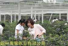 禹果农业果园