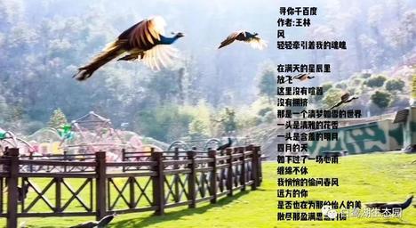 """""""丘比特神箭之吻""""  —绝美新昌白鹭湖生态园交友相亲一日游"""